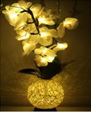 JRDZ Orchid Light
